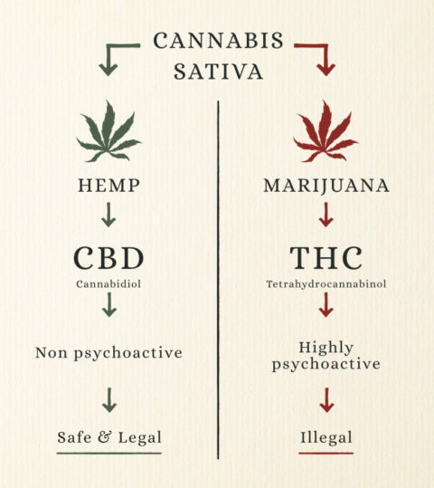 cbd-vs-thc-info-graph